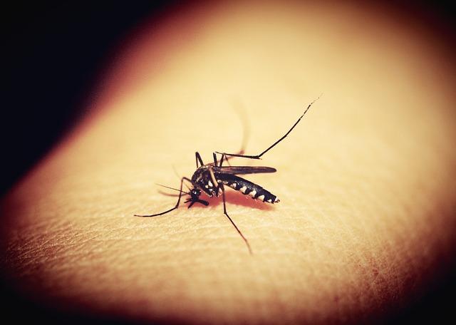 Zanzare: perché pungono proprio te?