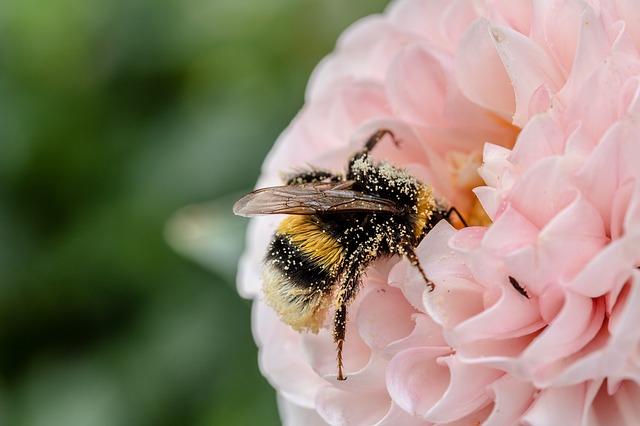 Api, vespe e calabroni: come evitare le punture