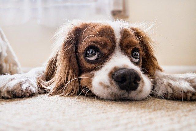 Come eliminare i cattivi odori degli animali